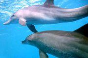Delphin und Schnorchel Tour